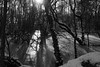 Frozen in Time (steve_whitmarsh) Tags: kintore aberdeenshire scotland snow ice winter nature frozen bw mono monochrome trees