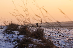 Winter Walk (CoolMcFlash) Tags: landscape landschaft canon eos 60d person man sunset sundown winter snow cold sky mann sonnenlicht sonnenuntergang himmel fotografie photography loweraustria austria österreich feld field nature natur tamron f004 90mm pov perspective perspektive