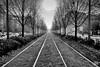 498201712aMILANO-73-Modifica (GIALLO1963) Tags: ze ngc blackandwhite rails europe italy lombardia lombardy milano milan carlzeiss canoneos5ds street architecture