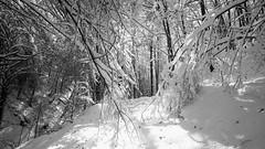 Sendero nevado (jumaro41) Tags: sendero nieve árboles monte montaña nature naturaleza natural nevada bosque deporte ejercicio eugi g hojas invierno landscape navarre