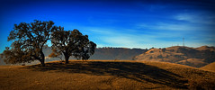 Two Oak Trees (Abel AP) Tags: trees mountains sky clouds landscape nature sunolregionalwilderness alamedacounty california northerncalifornia outdoor abelalcantarphotography oaktrees