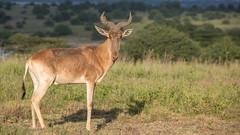 Nairobi-Nationalpark-8179 (ovg2012) Tags: kenia kenya nairobi nairobinationalpark