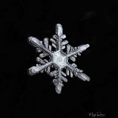 Freshly fallen snow (Margo Dolan) Tags: snowflake crystal snow macro canon65mpe 6d ringflash cold freezing winter color focusstacking nature symmetry pattern black white star