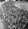 Flower Power (Jan Zielinski) Tags: bergen hordaland rain mediumformat film fuji fujireala kodaktmax kiev88 russiancamera vegetation flowers blackandwhite bw