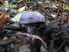 Fungi (Tag1066) Tags: mushroom fungi fungus toadstool toadstools