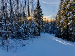 My Idea of Paradise (briburt) Tags: briburt snow winter trail snowy wintry forest pine tree icy sunset sundown sun rays sunrays peaceful calm zen maine newengland relax sky blue white pines ski nordic nordicski tracks snowscape sublime still stillness cold cool road wood woods