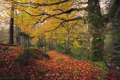 Dentro de Oza (Alberto Lacasa) Tags: gree autumn musgo selva canon paraiso huesca rocas pirineos trees eos stone aragon arboles musk forest 1740 5d naturaleza otoño oza pyrenees parquenatural verde
