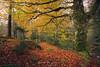 Dentro de Oza (Aildrien) Tags: gree autumn musgo selva canon paraiso huesca rocas pirineos trees eos stone aragon arboles musk forest 1740 5d naturaleza otoño oza pyrenees parquenatural verde