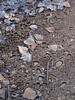 "Huecos alrededor de los cantos, cantos enmarcados, frost-heaving (elevación por congelación) - Río Borosa (Jaén, España) - 03 (Banco de Imágenes Geológicas) Tags: lomademariaangela andalucia españa esp ""geology imagesearth science imagesimage bank ""ciencias de la tierra"" geologi geología geológia geologie géologie geologija ġeoloġija ģeoloģija geology geoloogia gjeologji heolohiya jarðfræði jeoloji jiologia xeoloxía γεωλογία геалогія геология геологія daeareg địachất geolaíocht גאולוגיה געאָלאָגי "" جيولوجيا زمین شناسی ธรณีวิทยา 地質 地質学 geomorfología geomorphologie geomorphology geomorfologi géomorphologie geomorfologia ""yüzey bilimi"""