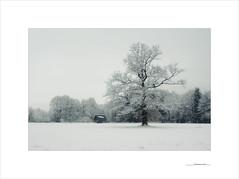 De invierno y luces (E. Pardo) Tags: invierno winter árbol cabaña hütte barn tree baum nieve schnee snow frío cold kalt paisaje landscape landschaft admont steiermark austria