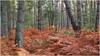woodland (kurtwolf303) Tags: 2017 deutschland wald bäume farne trees woodland germany fischlanddarszingst mecklenburgvorpommern fern forest nationalparkvorpommerscheboddenlandschaft nature natur landscape landschaft unlimitedphotos omd microfourthirds olympusem1 micro43 systemcamera mirrorlesscamera mft kurtwolf303