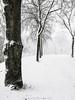snow time (fotos_by_toddi) Tags: fotosbytoddi voerde niederrhein nrw nordrhein westfalen schnee snow letitsnow handybild handy huawei germany deutschland drausen winter tree baum bäume kalt