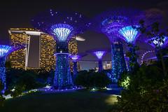 Digital Singapore.jpg (Darren Berg) Tags: singapore super supertree garden bay blue sands marina architecture