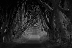 Internal Exile (plot19) Tags: here northern ireland dark hedges britain british blackwhite landscape uk plot19 photography north northwest now trees mood