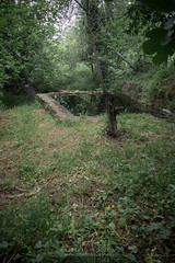 CASTAÑO DEL ROBLEDO (ALBERTO BOUZÓN TIRADO) Tags: castaño robledo sierra senderos huelva