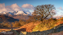 Loughrigg fell ... (Mike Ridley.) Tags: lonetree loughriggfell lakedistrict cumbria snow mountains nature sonya7r2 mikeridley