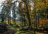 Woodland in October - NK2_3172 (Jean Fry) Tags: burrator dartmoor dartmoornationalpark devon englanduk narratorplantation nationalparks trees uk westcountry woodland woods autumn