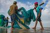 Fishermen (SaumalyaGhosh.com) Tags: fishermen people fishing color beach india street streetphotography net fishingnet fish watch sea