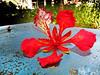 By: RainBoy (Guilherme Alex) Tags: flowers colorfull nature garden life day amateur art beatifull cutout bw