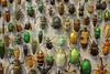 Bugs (Mister_Haytch) Tags: insect insects beetle beetles nature museum university oxford