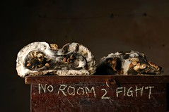 No Room 2 Fight (Studio d'Xavier) Tags: noroom2fight stilllife pumpkin mold strobist werehere raggedtagging