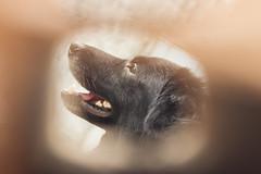 (Lua Pramos) Tags: pet animal love amor lucianapramos luapramos fotografia photography animais nature cani perro filho cachorro cão catioro dog luciana pramos canon