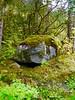 Green Lush Mosh on a Rock in a Temperate Forest in Juneau, Alaska (Seymour Lu) Tags: rock stone boulder moss mossy green lime forest cold temperate deciduous leaves northern plants habitat hiking travel juneau alaska trail lumix vario dmcg5