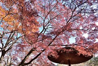 秋日紅葉03