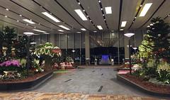 Christmas spirit at Singapore Airport (peggyhr) Tags: singapore peggyhr