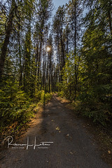 Walking Along The Trail At Apgar (rebeccalatsonphotography) Tags: hike hiking trail sunstar afternoon forest woods trees talltrees np mt montana glacier nationalpark apgar rebeccalatsonphotography canon 5dsr