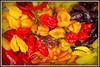 mix pepper (defci) Tags: pepper peperoncini peperoncinipiccanti mix