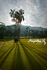 2017#39 (Augustinwee Photography) Tags: augustinweephotography golf golfclub trees forest travelphotography grass jungle malaysia langkawi greenpasture skyline cloudysky nikonflickraward