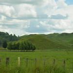 The green fields of New Zealand I thumbnail