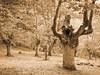 "Un ""ENT"" en nuestros bosques (josuneetxebarriaesparta) Tags: ent zuhaitza arbol tree mendi bosque forest ametsak sueños dreams paisaia paisaje landscape"