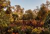 0F1A2907 (Liaqat Ali Vance) Tags: nature trees flowers lawrence garden colors google liaqat ali vance photography lahore punjab pakistan