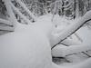 em10-171216-162950 (andischuwirth) Tags: bayerischerwald olympusomdem10 panasoniclumixg14mmf25 tree snow winter