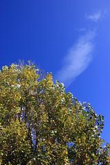Tree Cloud (JB by the Sea) Tags: petaluma sonomacounty california winecountry sonomavalley november2017 tree trees sky cloud clouds