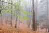 Il bosco (pinomangione) Tags: pinomangione bosco gambarie calabria fotoamatorigioiesi