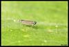 3630-Cigarrinha (Ana Gadini) Tags: cigarrinha canon macro novafriburgo brasil brazilcanonef100mmlf28macrousm canonef100mml canonef100mmmacrousml canon100mmlf28macrousm canon100mmmacrol canon70d 70d canoneos anaclaudiafriburgo anaclaudiafotografias anaclaudia friburgo regiãoserrana serra montanha mountain riodejaneiro fotocartão cartão foto cart postal fotosàvenda vendadefotos vendadecartões fotográficos cartãopostal àvenda forsale presente present souvenir lembrança gift natureza nature insect inseto