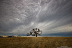 Dark Forces (michael ryan photography) Tags: storm darkclouds ominious lonetree tree oaktree field calaverascounty california dramatic lonely approachingstorm clouds dark mood northerncalifornia michaelryanphotography