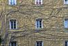 Grapevines (Louis Geoffroy) Tags: vigne grapevine building housebeige windows fenêtres