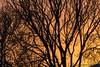 evening (Marjon van der Vegt) Tags: denhaag winter piano avondlucht sneeuwpoppen engelen wandelvondst thorbeckelaan opstraat straatfotografie