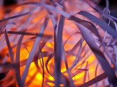 Stream on (BeMo52) Tags: licht light luftschlangen macro macromondays makro neijahr neujahr newyearseve paper paperstreamers papier stimmung streamers wärme warmness weiss whitepaper redux2017myfavoritethemeoftheyear