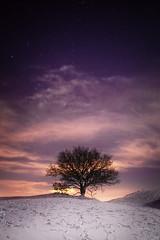 Orion View (Geoff Moore UK) Tags: malvernhills malvernhillsfrostywinter malvernhillsnight malvernhillssnowcovered malvernhillssnowcoveredmoon malvernhillssnowfall malvernhillssnowcoveredmoonlight lowlight astrophotography rural mountains snow peaks cold windy frozen ice clearskies darkskies lightpollution tree sky dusk
