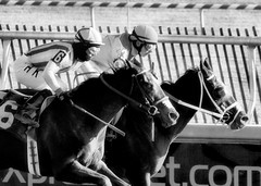 "2017-12-26 (71) r5 Weston Hamilton on #3 Tiz Surprised (on the inside) - monochrome (JimFleenor) Tags: photos photography ""laurel park"" maryland md ""maryland races"" horse jockey جُوكِي ""赛马骑师"" jinete ""競馬騎手"" dżokej jocheu คนขี่ม้าแข่ง jóquei žokej kilparatsastaja rennreiter fantino ""경마 기수"" жокей jokey người horses thoroughbreds equine equestrian cheval cavalo cavallo cavall caballo pferd paard perd hevonen hest hestur cal kon konj beygir capall ceffyl cuddy yarraman faras alogo soos kuda uma pfeerd koin حصان кон 马 häst άλογο סוס घोड़ा 馬 koń лошадь laurelpark marylandraces races outdoors outside winter cold westonhamilton"