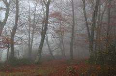 Bosque y niebla (isabel muskiz) Tags: tree bosque naturaleza nature navarra niebla forest