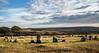 Bronze Age Stone Circle - NK2_3004 (Jean Fry) Tags: brisworthy brisworthystonecircle bronzeage dartmoor dartmoornationalpark devon englanduk monuments moorland nationalparks stonecircles uk westcountry standingstones ringmoordown