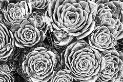 Inner disquiet (jgokoepke) Tags: innerdisquiet succulent green berkeley california usa bw
