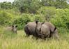 White Rhinoceros - Ceratotherium simum - Breitmaulnashorn (jaffles) Tags: southafrica südafrika krügernationalpark kruger np wildlife natur nature beautiful olympus safari