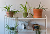 Our Room Decor (joeygaskell) Tags: life decor indoor room bedroom plant plants pot cactus photo photography color shelf photos beautiful living breath breathing sony a6300 sonya6300 mirrorless lens lenses canada ottawa winter